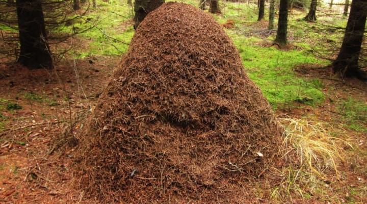 El termitero.