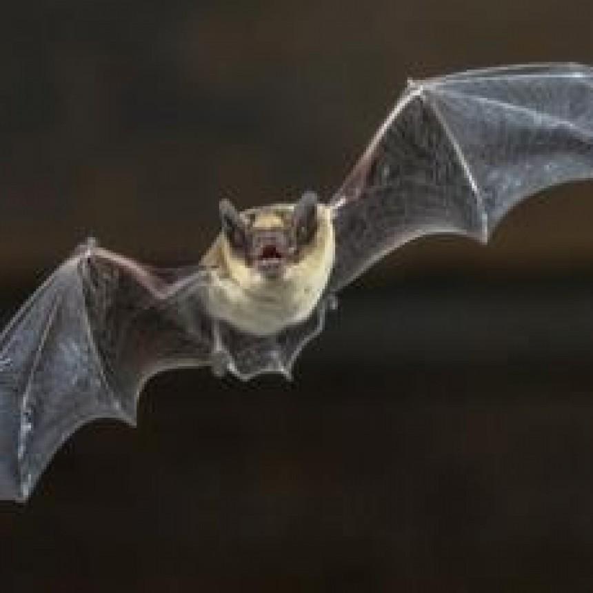El murciélago de Wuhan