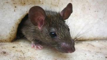 De ratas, guerrillas y Sandra.